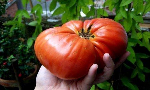 Число погибших от ядовитых овощей в Германии увеличивается