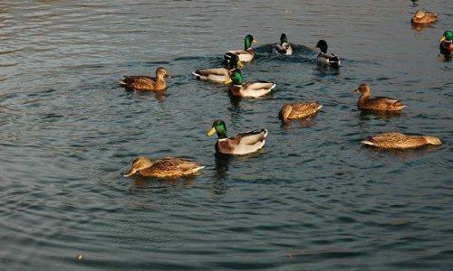 ...зимы отмечается как Всероссийский День зимующих птиц.