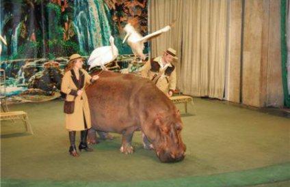 """09:55 Театр зверей  """"Уголок дедушки Дурова """" отмечает свое столетие.  Главные действующие лица в театре - звери..."""